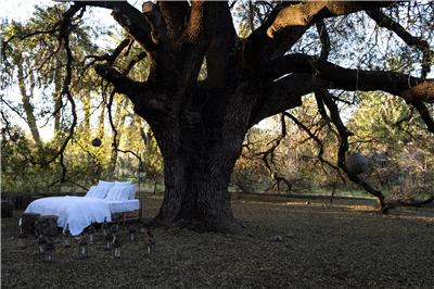 Valerie Barkowski Campaign bed linen blanc under the tree vbarkowski photo delphine warin