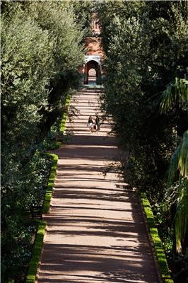 LA MAMOUNIA The Gardens 01